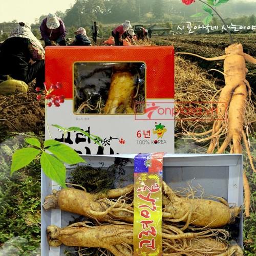 Nhân Sâm tươi Hàn Quốc loại 4 củ/kg NS002
