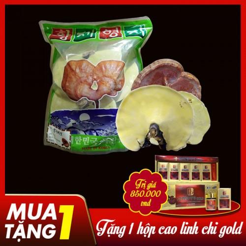 Nấm linh chi vàng thượng hạng đặc biệt túi L038