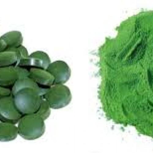 Tảo xoắn Spirulina tăng cường hệ miễn dịch và tiêu hóa