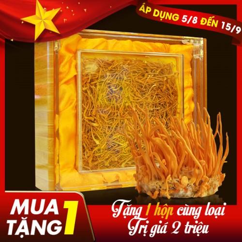 Nấm đông trùng hạ thảo Việt Nam sấy khô cao cấp hộp 100gr D205