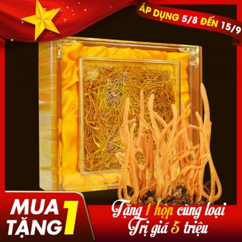 Đông trùng hạ thảo khô Việt Nam chất lượng cao hộp 250gr D206