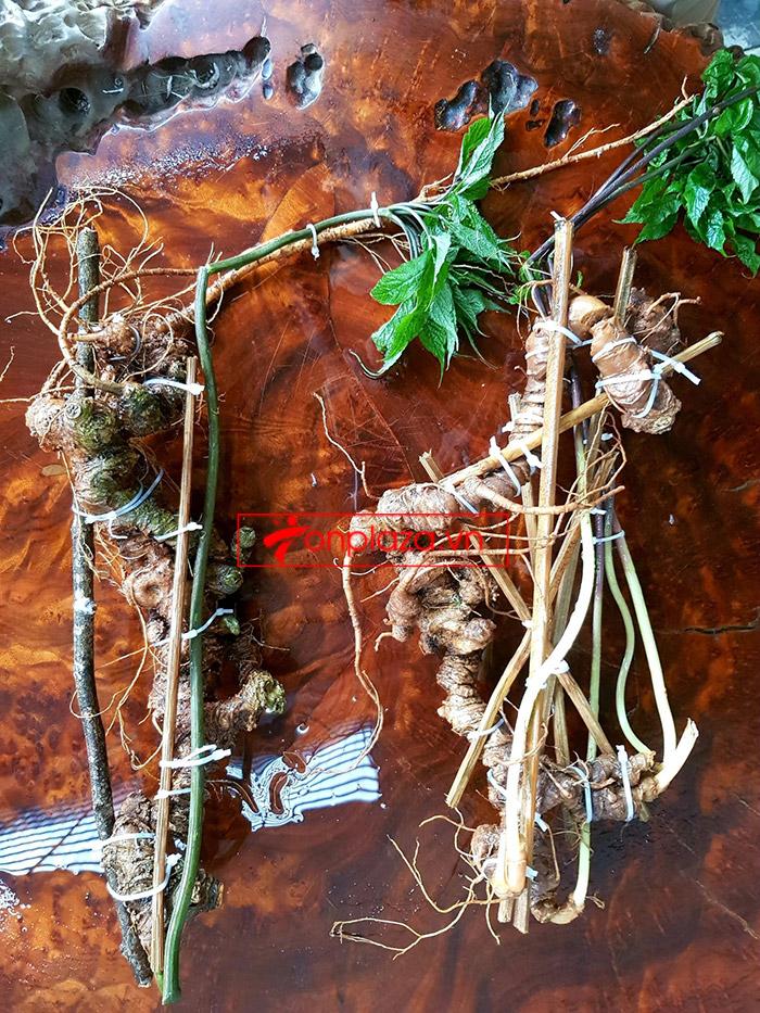 2 củ sâm Ngọc Linh rừng siêu quý hiếm (1 củ khoảng 60 năm tuổi, dài 60 phân) 2