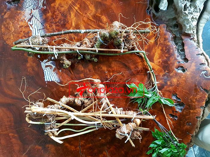 2 củ sâm Ngọc Linh rừng siêu quý hiếm (1 củ khoảng 60 năm tuổi, dài 60 phân) 4
