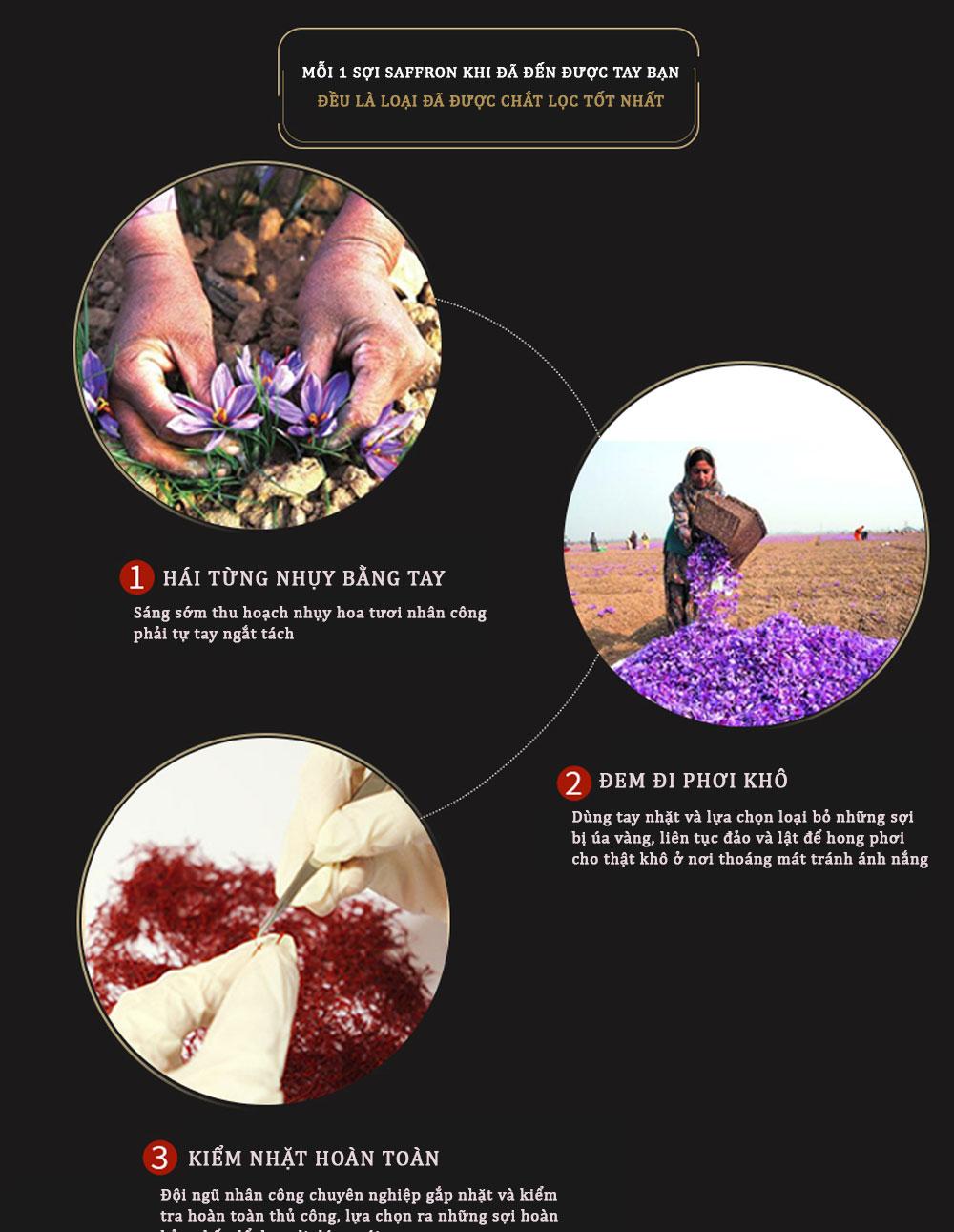 ad nhụy hoa nghệ tây 9