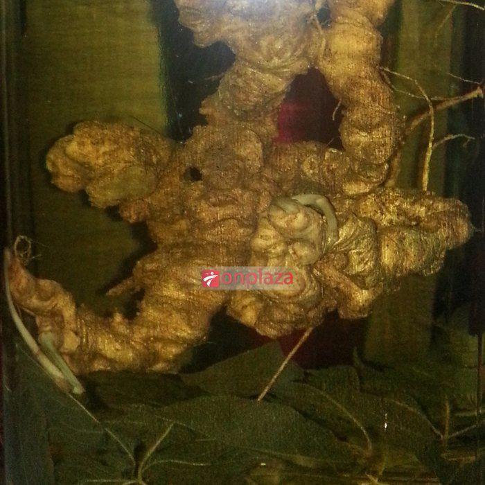 Bình sâm Ngọc Linh tươi 2,7kg 27 củ sâm NS188 2