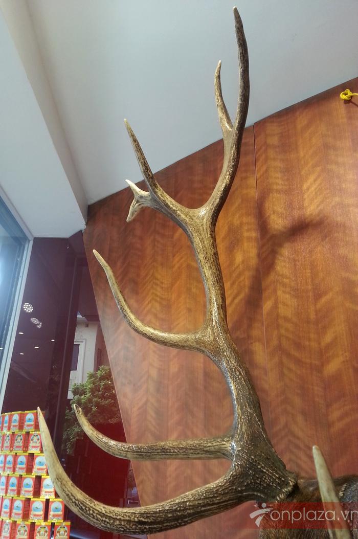Đầu Hươu Nguyên Chiếc NH017 6
