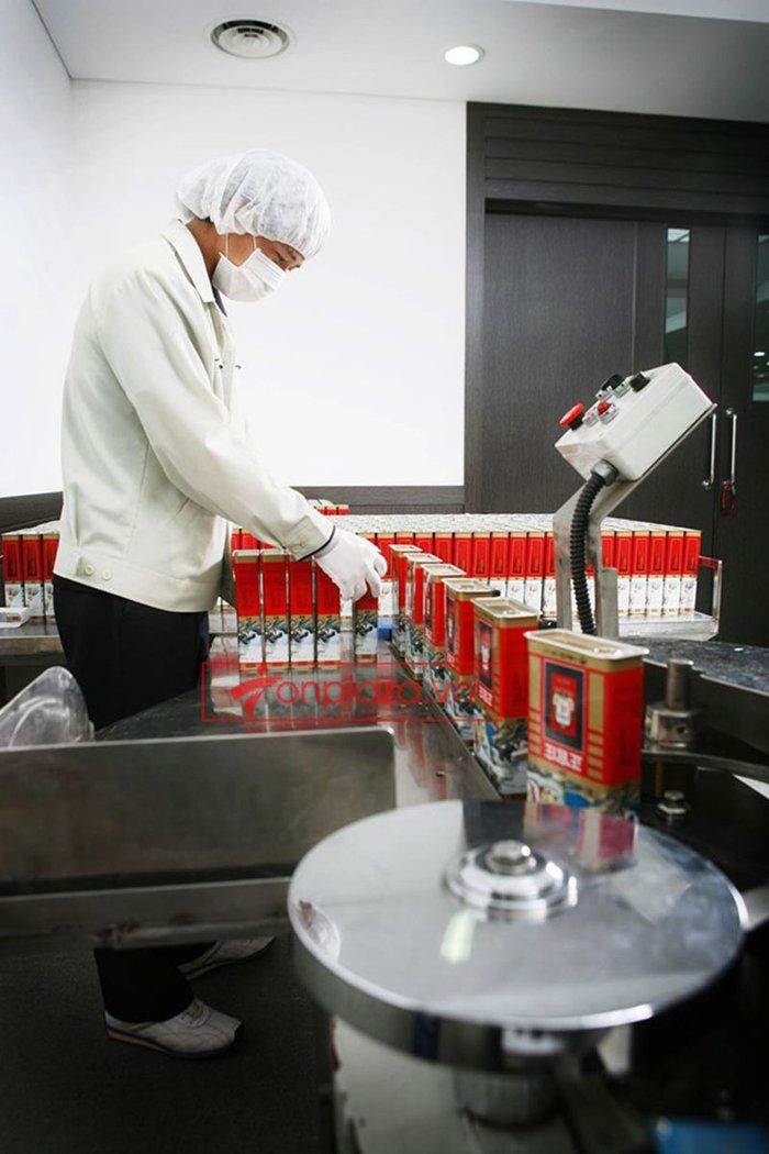 một số hình ảnh về quy trình sản xuất và đóng gói sp hồng sâm củ khô cao cấp chinh phu kgc hộp thiếc 6