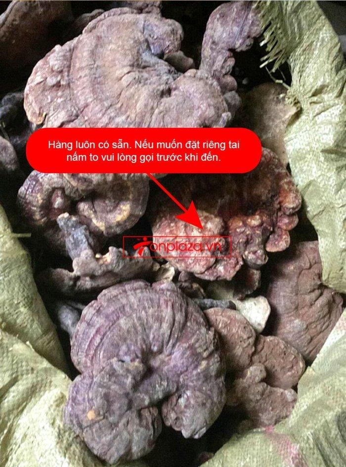 Nấm lim xanh Quảng Nam hộp quà biếu1kg/hộp L294 12