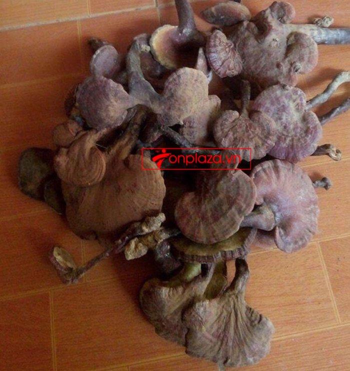 Nấm lim xanh Quảng Nam hộp quà biếu1kg/hộp L294 13