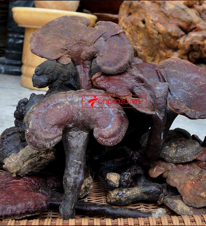 Nấm lim xanh tự nhiên 100% Quảng Nam 1kg/hộp L306 3