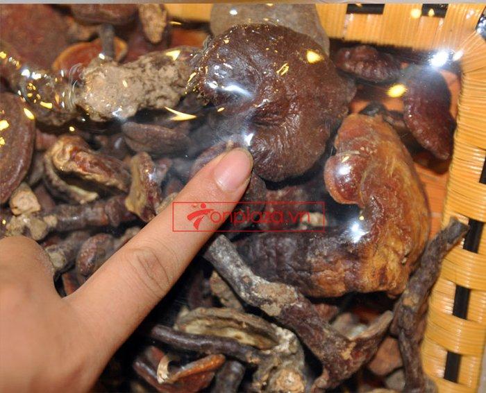 Nấm lim xanh tự nhiên Quảng Nam tai nhỏ hộp 1kg L309 4