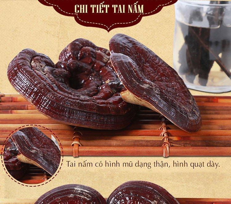 Nấm linh chi đỏ thượng hạng Hàn Quốc L048 6