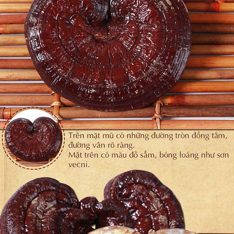 Nấm linh chi đỏ thượng hạng Hàn Quốc L048 7