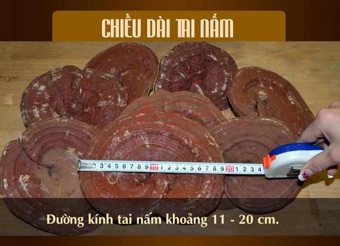 Nấm linh chi đỏ thượng hạng hộp quà biếu (1kg/ hộp) L047 8