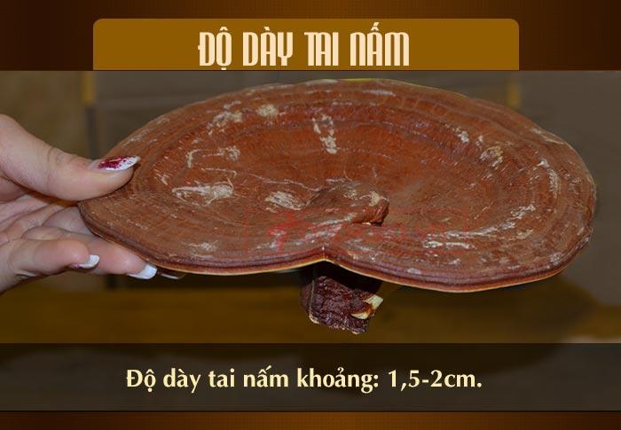 Nấm linh chi đỏ thượng hạng hộp quà biếu (1kg/ hộp) L047 9