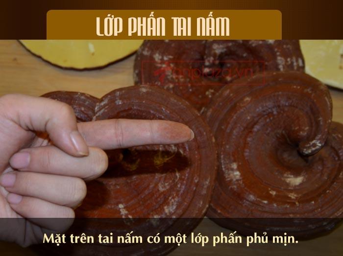 Nấm linh chi đỏ thượng hạng hộp quà biếu (1kg/ hộp) L047 10