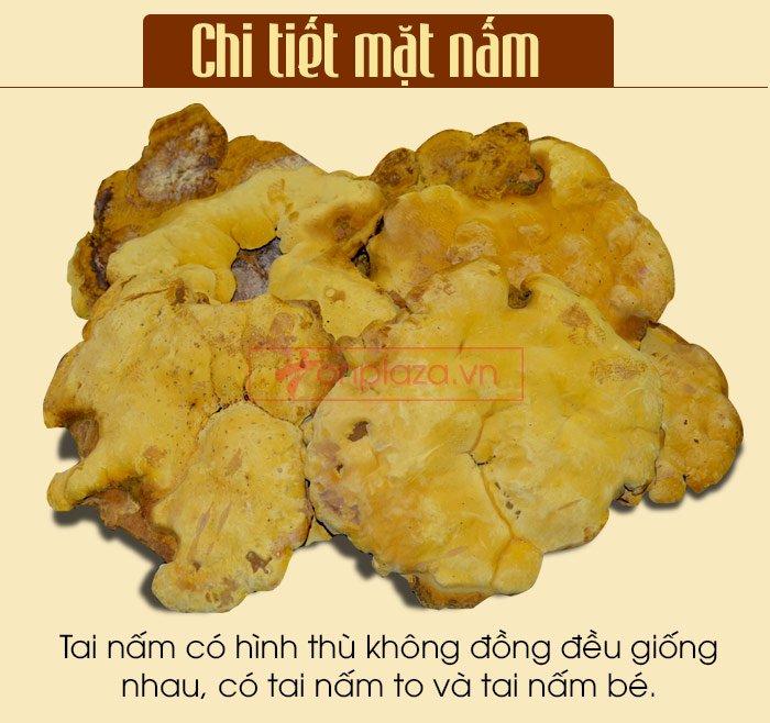 Nấm Linh Chi Thượng Hoàng ( 0.5kg/1 Hộp) L022 7