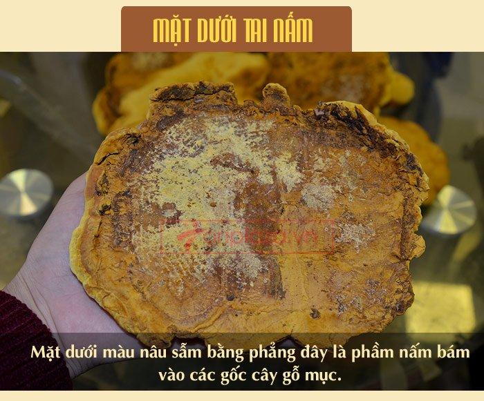 Nấm Linh Chi Thượng Hoàng ( 0.5kg/1 Hộp) L022 9