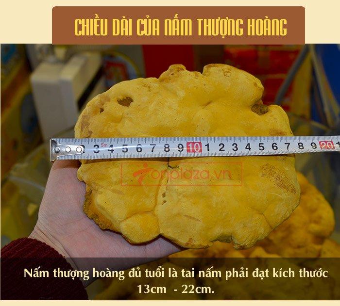 Nấm Linh Chi Thượng Hoàng ( 0.5kg/1 Hộp) L022 10