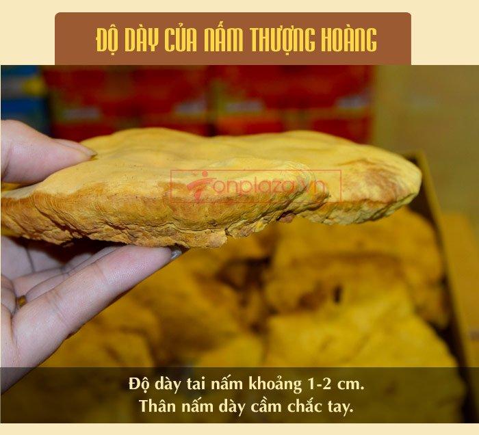 Nấm Linh Chi Thượng Hoàng ( 0.5kg/1 Hộp) L022 11
