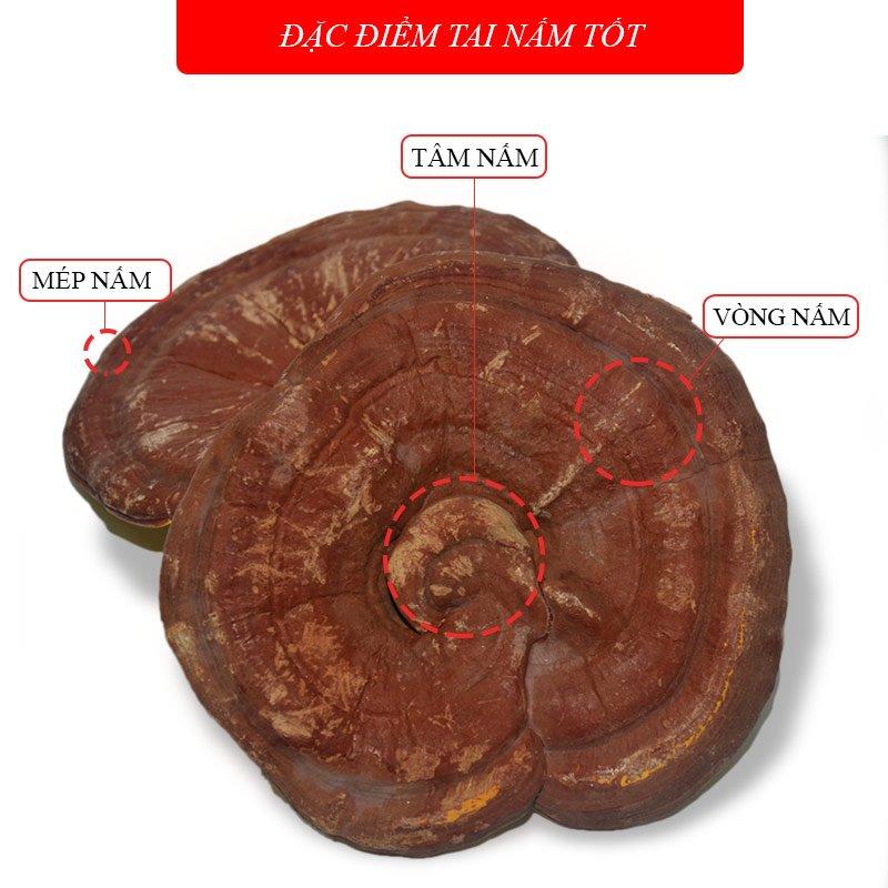 Nấm linh chi vàng thượng hạng đặc biệt túi L038 5