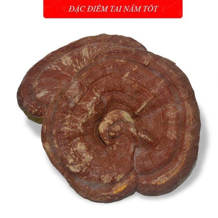 Nấm linh chi vàng thượng hạng Hộp quà biếu (1kg/ hộp) L027 3