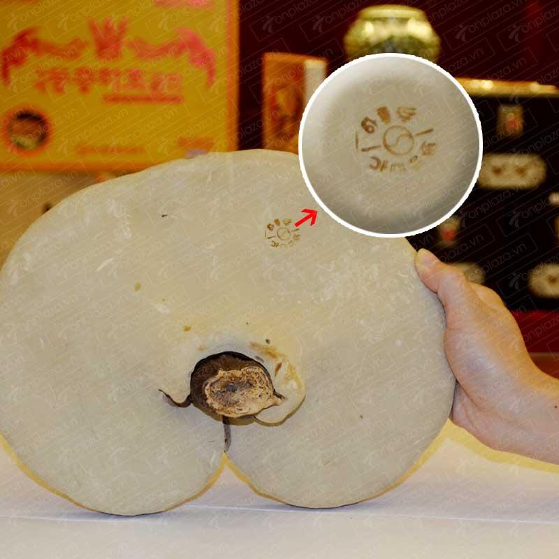 Nấm linh chi Vàng (Túi 3-6 tai/Kg) L005 4