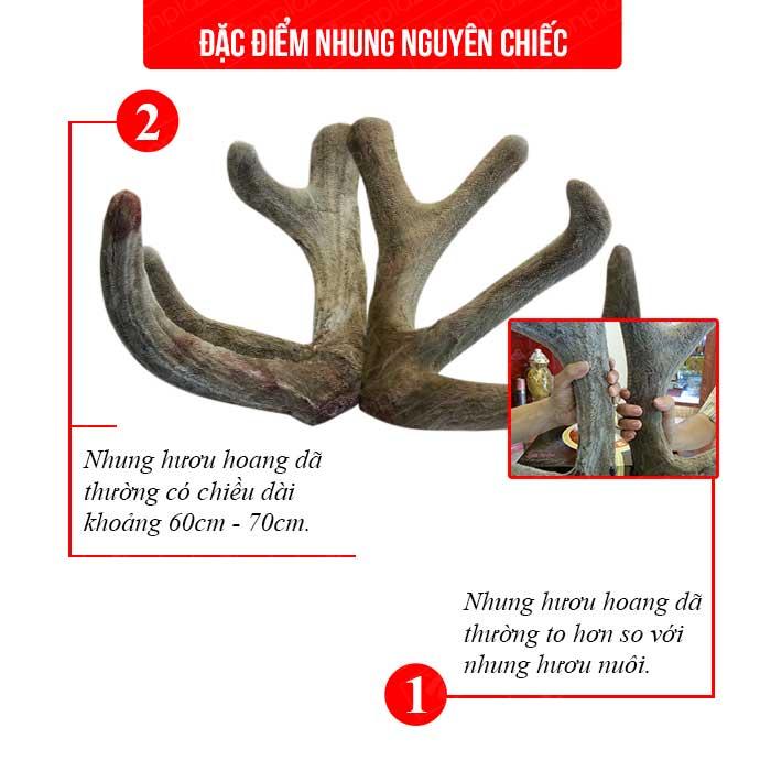 Nhung hươu tươi hoang dã nguyên cặp loại to (loại 1kg) NH010 1