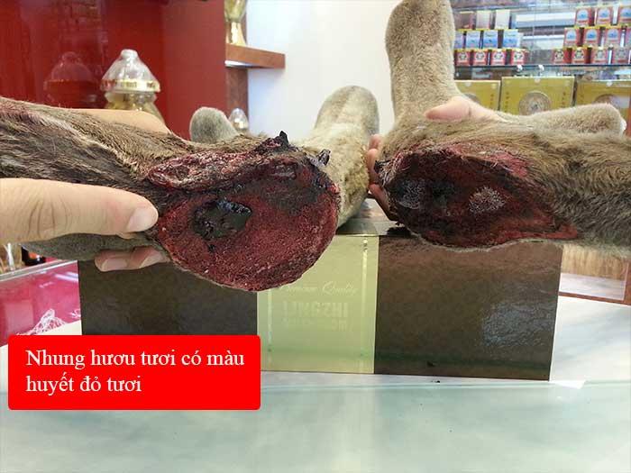 Nhung hươu tươi hoang dã nguyên cặp loại to (loại 1kg) NH010 2