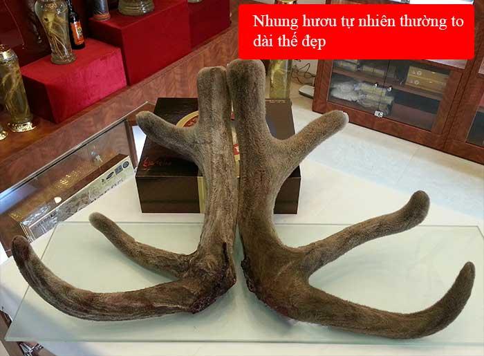 Nhung hươu tươi hoang dã nguyên cặp loại to (loại 1kg) NH010 3