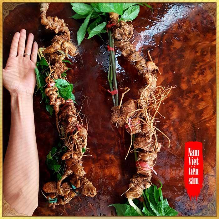 Sâm núi Ngọc Linh tự nhiên Quảng Nam loại 6 lạng 1 củ