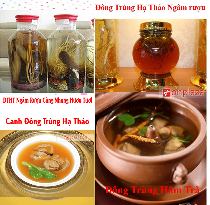 cach-su-dung-dong-trung-ha-thao-copy