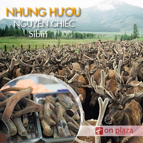 Nhung hươu khô nguyên chiếc Altai
