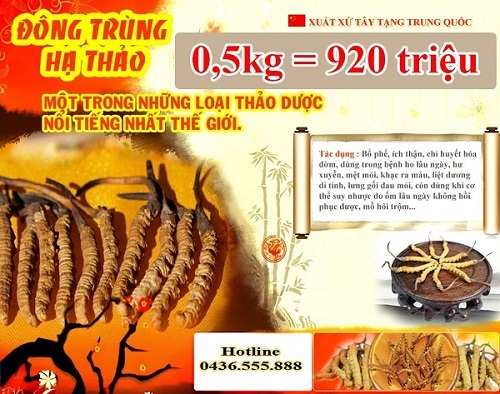 Đông trùng hạ thảo cao cấp loại 0,5kg