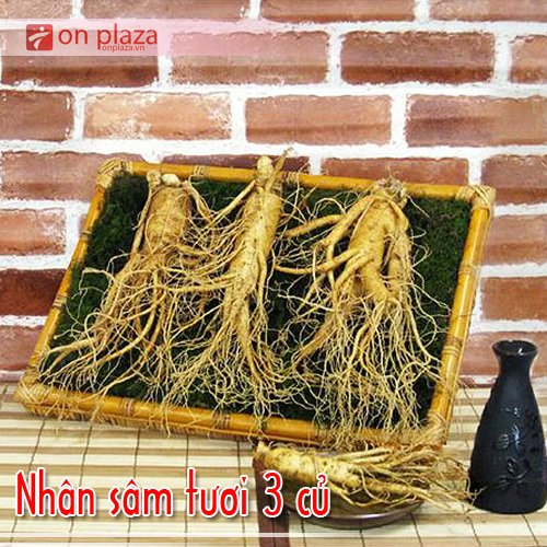 Nhân sâm tươi Hàn Quốc 3 củ/kg