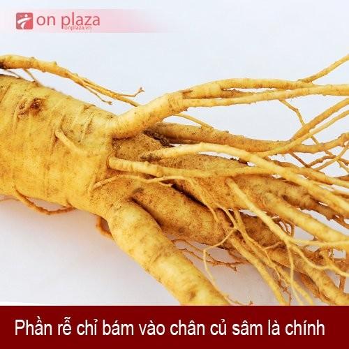 nhan-sam-tuoi-han-quoc-2