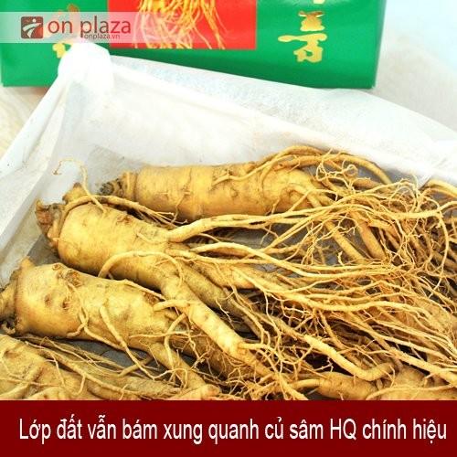 nhan-sam-tuoi-han-quoc-3