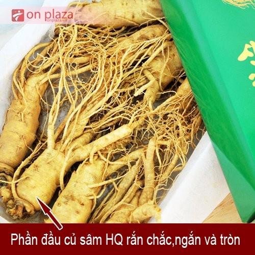 nhan-sam-tuoi-han-quoc-4